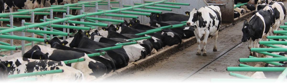 Cow Welfare - GreenStall Easy