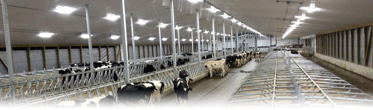 Cow Welfare - Flexible Feeding Fence